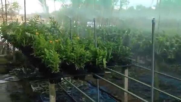 Dàn phun sương trong vườn lan